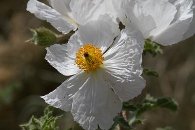 Hy 168 Wild Flowers