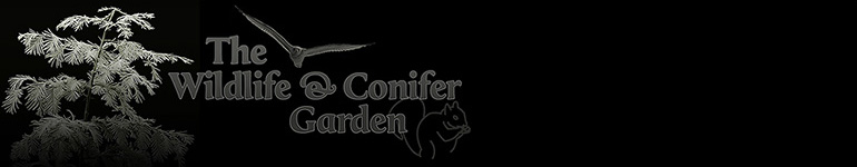 The Wildlife & Conifer Garden
