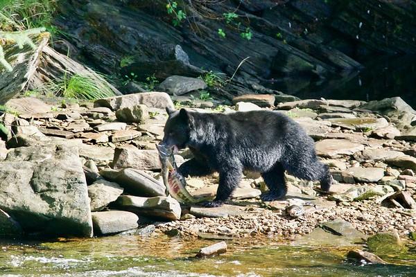 Neets Bay Bears