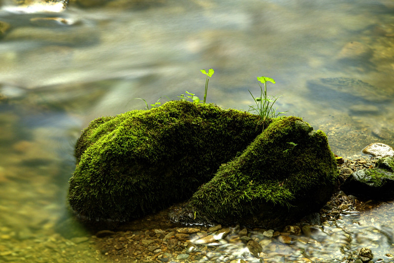 A moss-covered rock at Rocky Fork State Park in Flag Pond, TN on Saturday, June 13, 2015. Copyright 2015 Jason Barnette