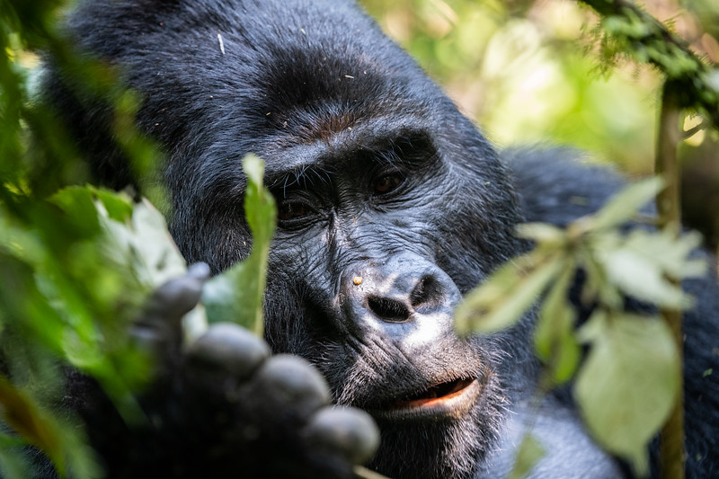 Uganda_T_Gor-1684.jpg