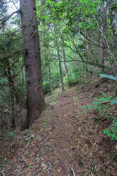 Mountains-to-Sea Trail -- 5,330'