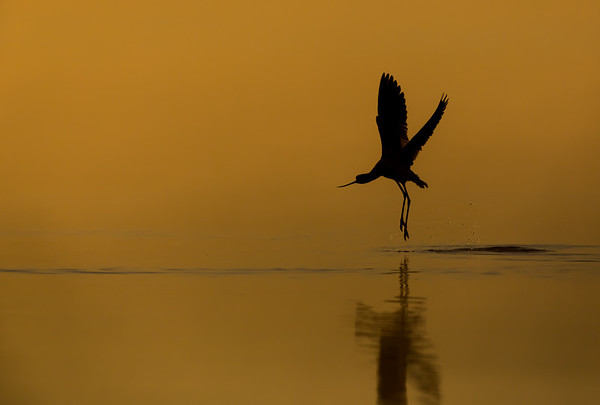 Backlit Birds and Silhouettes
