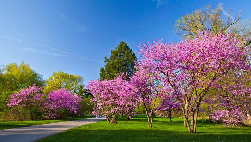 Spring12-1539-Edit copy 2.jpg