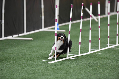 """Saturday Masters/Excellent Standard 20"""" Group 1"""