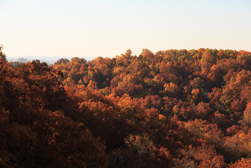2013_11_03 Missouri Fall 012.jpg