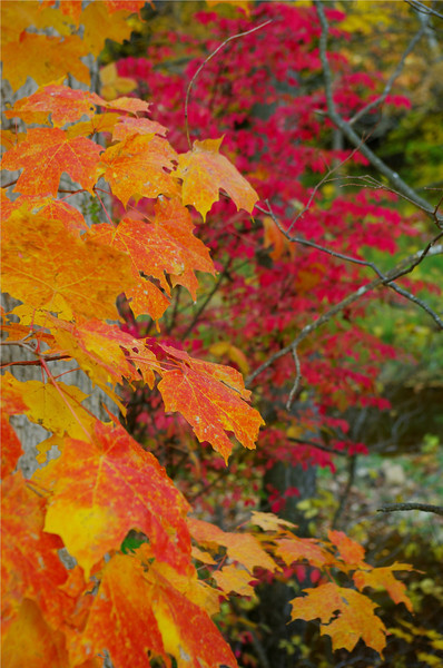 FAll Color #@.jpg