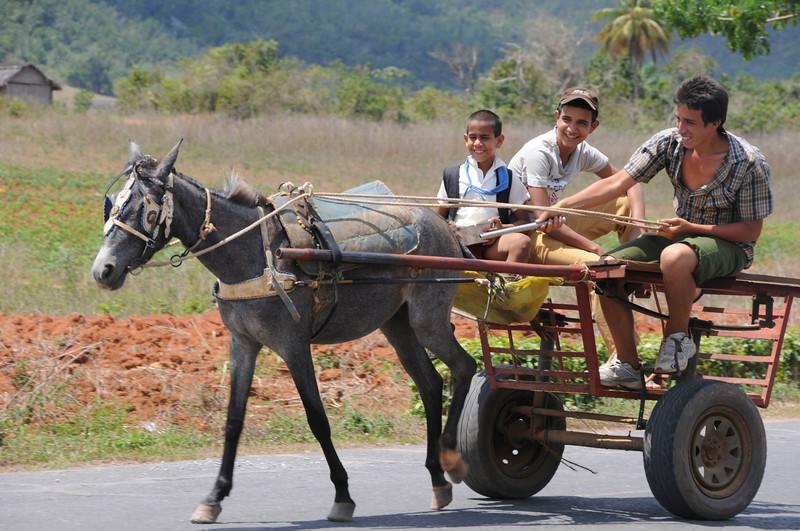 Cuba Carts-6.jpg