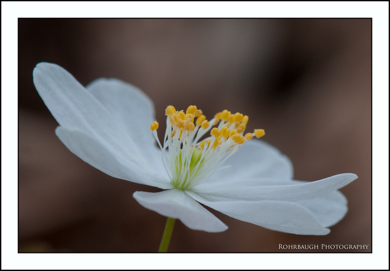 Rohrbaugh Photography Flowers 77.jpg