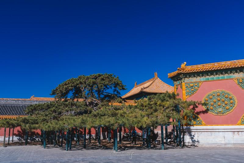 BeijingMarch2019-103.jpg