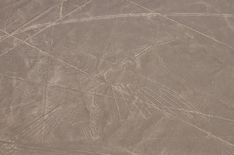The Condor – Nazca Lines