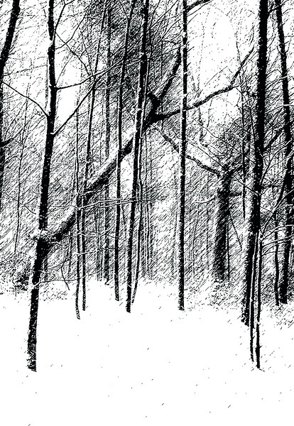 Woods in P and Ink.jpg
