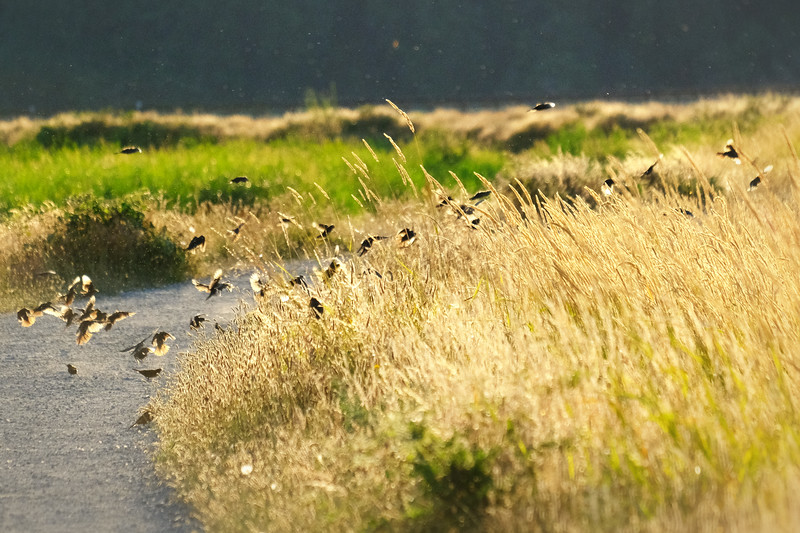 birds-golden.jpg