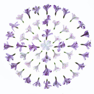 Light Table Flowers