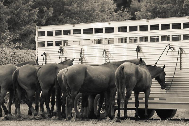horses resting2.jpg