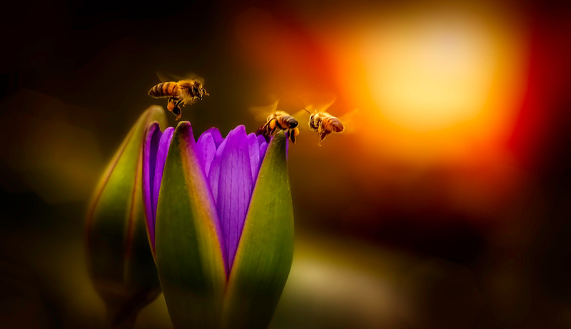 Lily and Honey Bee - 15.jpg