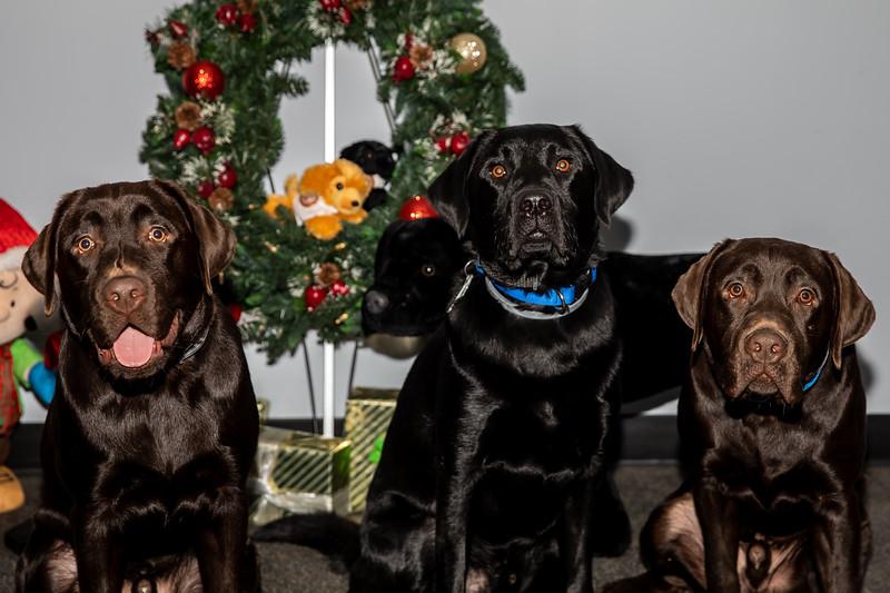 Dogs (202 of 282).jpg