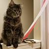 2018-01-23 Finn Outside Elise Bedroom Door Cat V(8)