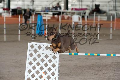 Flying Dobermans