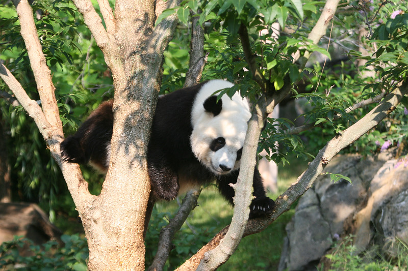 Panda072807_040.JPG