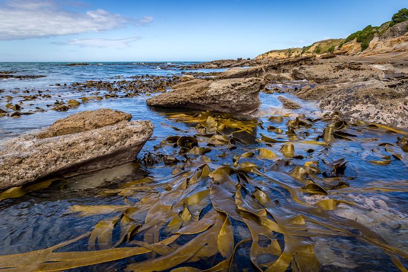 Algen beim Shag Point