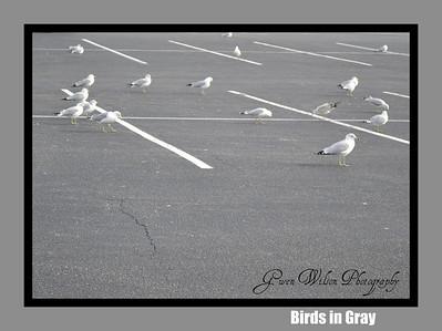 Birds in Gray