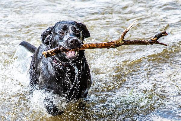 Duke at the Danvers Reservoir