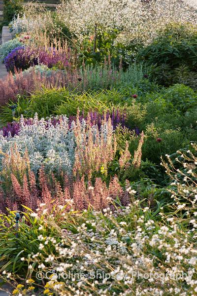 The Organic Gardens, Holt Farm-2283.jpg
