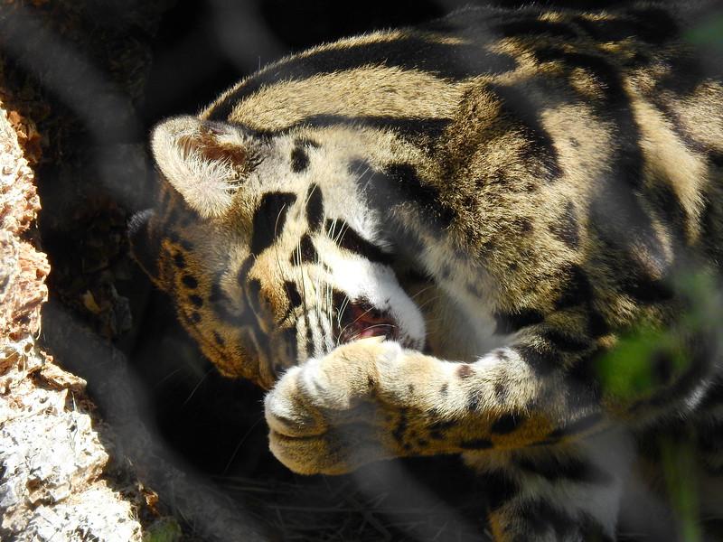 Denver Zoo 2018 (2636).JPG