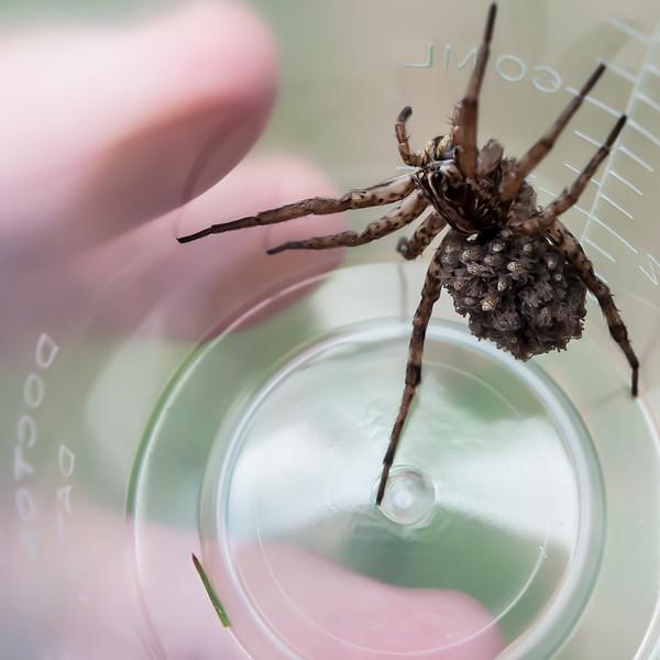 spider cup.jpg