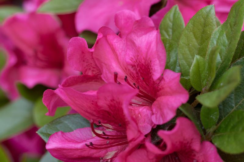 180512_15_6321_Flowers-1.jpg