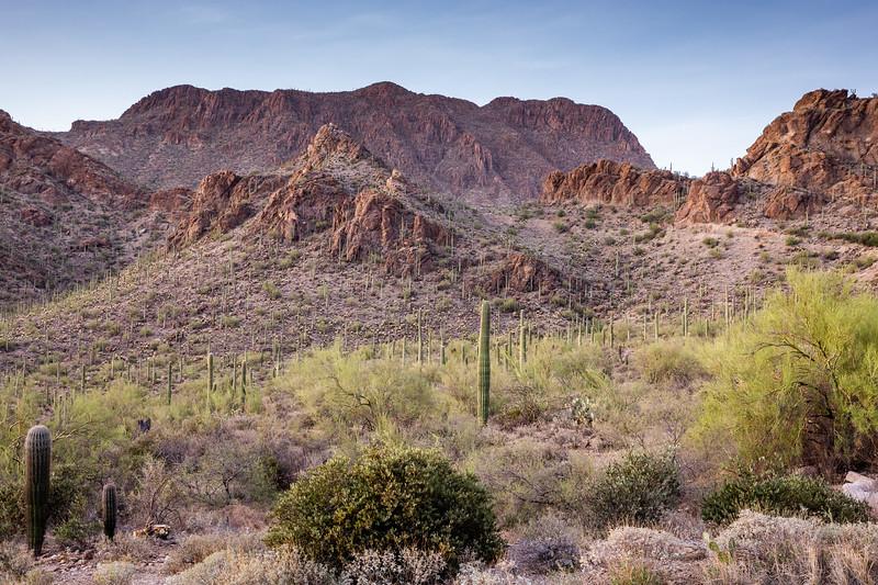 WVWS_Saguaro -4720.jpg