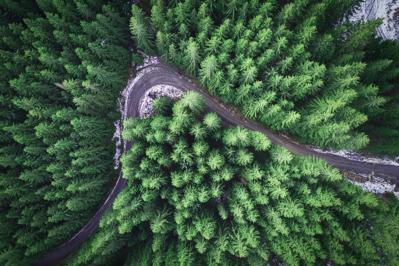 Empty road in a forest from a drone