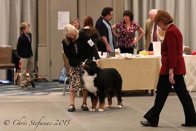 Amateur Owner Handler Dog 2015 BMDCA Natl. Specialty