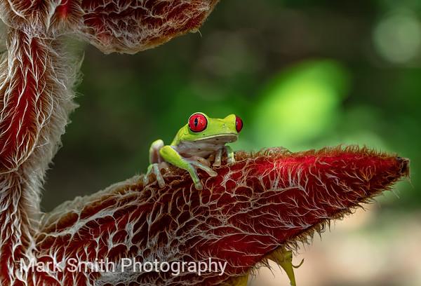 Costa Rica Image Gallery