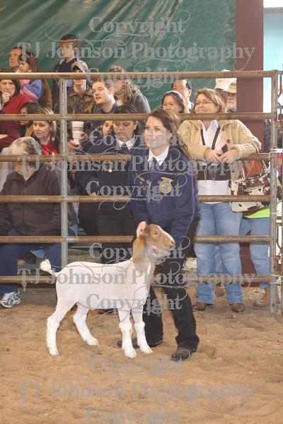 2011 Klein ISD Goat Show Class 1