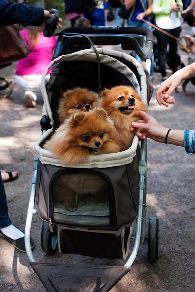 Helsinki Puppy Parade, 2016.