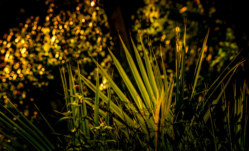 The Magic of Light-462.jpg