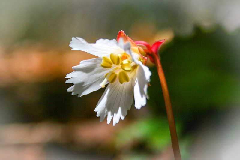 North Carolina Wildflowers