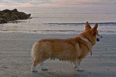 Beach, Winter 2005