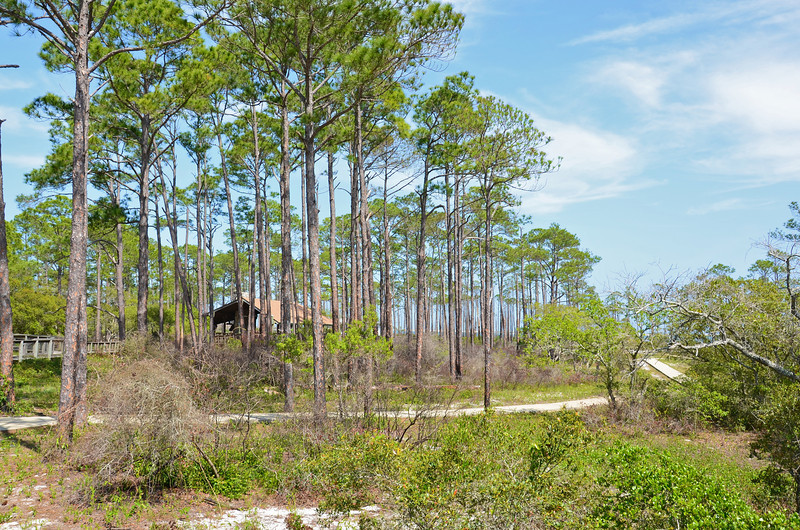 The Big Lagoon State Park sits on the northern shoreline of what else, The Big Lagoon, which separates mainline Florida from Perdido Key.  With its beaches, nature trails and open woodlands it is ideal for nature study.  Crabbing in the shallow waters is also a popular activity if you like crabs.