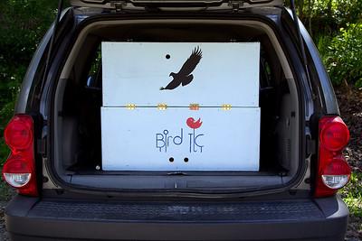Hollaway Eagle Release