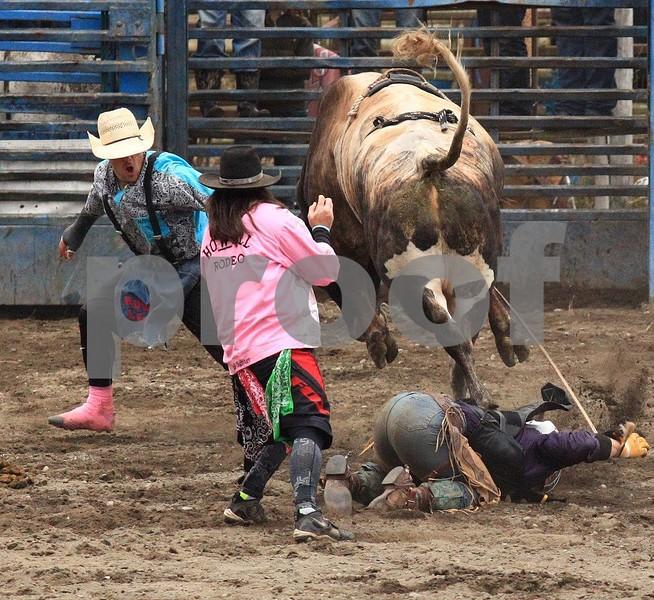 Bull riding 3456cc.jpg