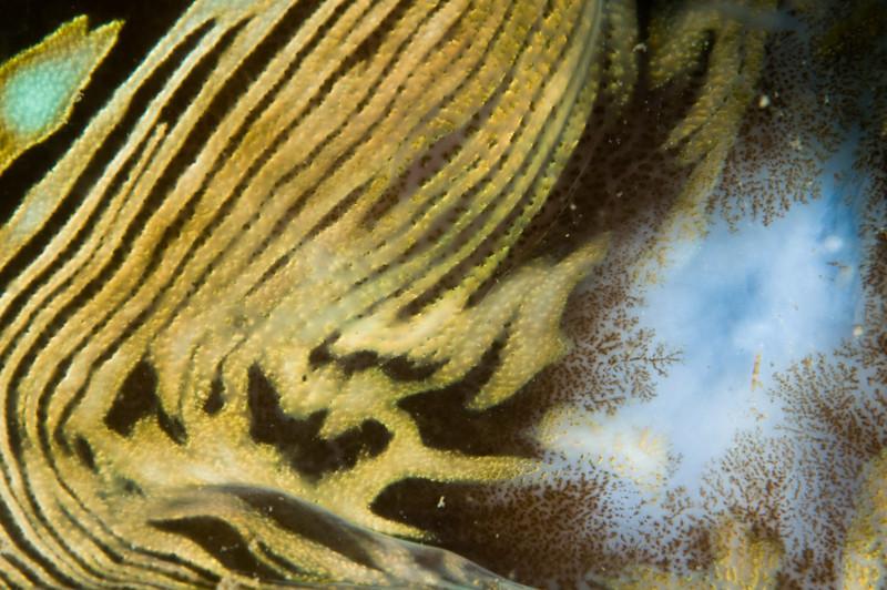 clam-4530.jpg