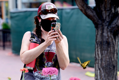 Photos: Butterfly Photo Safari on the Pearl Street Mall