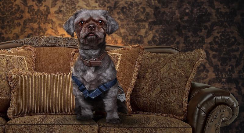 Doggy-2.jpg