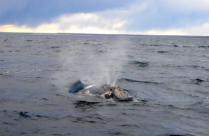 whale_2.JPG