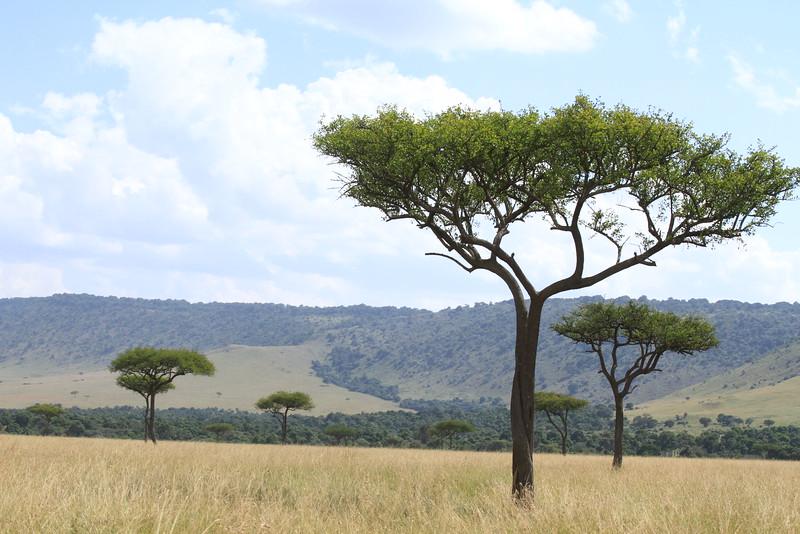 Kenya Part2 '15 890.JPG