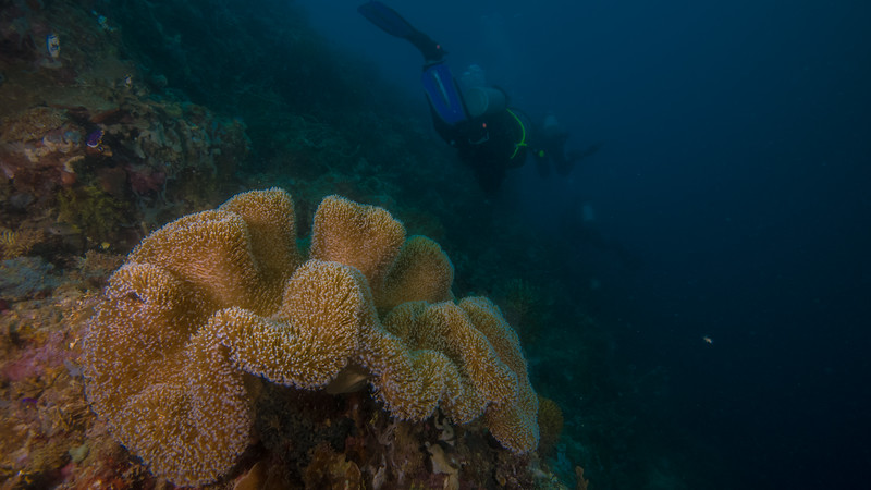 Taken at Matui divesite in Jailolo Island, North Maluku, Indonesia during our 8D7N excursion in March 2018