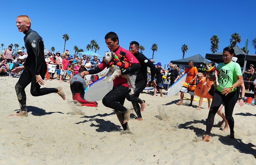 . Contestants, with their dogs and surfboards, sprint to the water to get started at the 5th Annual Surf Dog competition at Huntington Beach, California, on September 29, 2013.  AFP PHOTO/Frederic J. BROWN/AFP/Getty Images